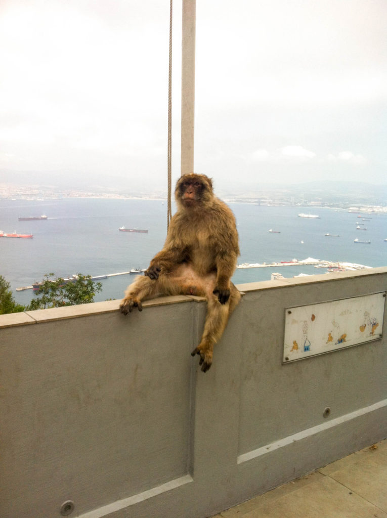 Gibraltar Great Britain United Kingdom monkey the Rock of Gibraltar