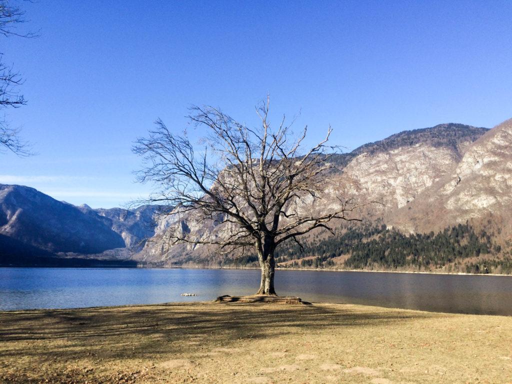 Bohinj Slovenia Triglav national park Bohinj lake Ribicev laz