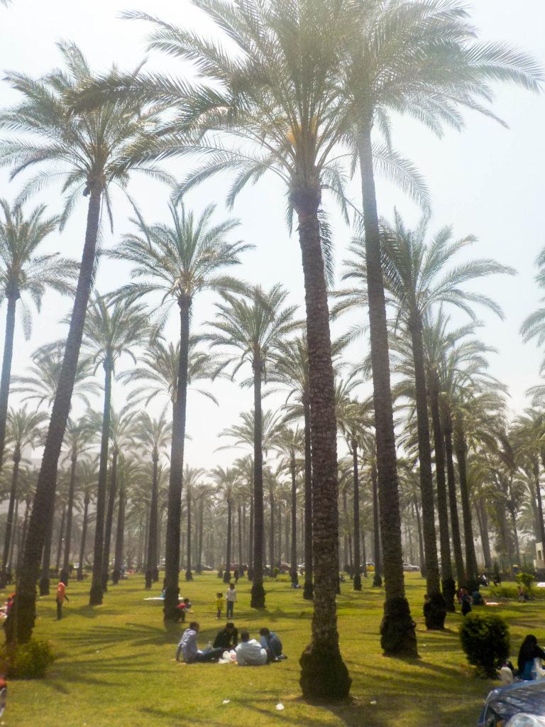 Montaza Palace Gardens palm trees Alexandria Egypt Africa