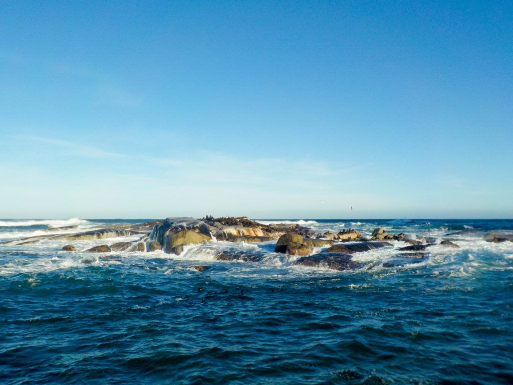 Hout Bay Cape Town South Africa Atlantic Ocean Duiker Island Cape Fur Seal Colony