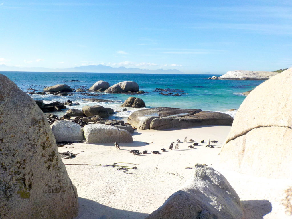 Boulders Beach Simon's Town South Africa jackass penguins colony Atlantic Ocean
