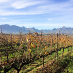 Getting to know South Africa's wine in Stellenbosch