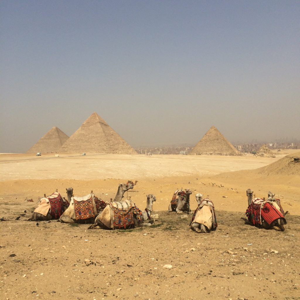 the Great Pyramids Cairo Egypt Africa camels