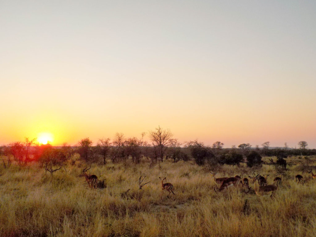 Kruger National Park South Africa safari antelopes sunset