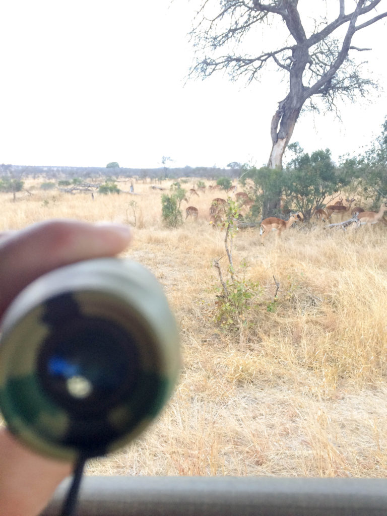 Kruger National Park South Africa safari monocular antelope