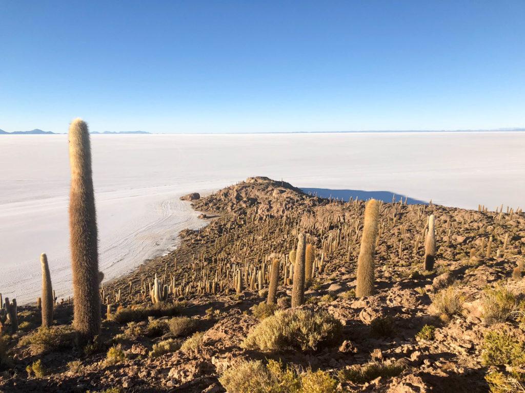 Isla Inchuasi Fish Island Salar de Uyuni salt flats and Reserva Nacional de Fauna Andina Eduardo Avaroa tour Bolivia South America