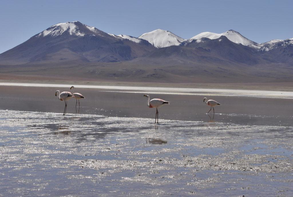 Laguna Hedionda Reserva Nacional de Fauna Andina Eduardo Avaroa Uyuni Bolivia South America