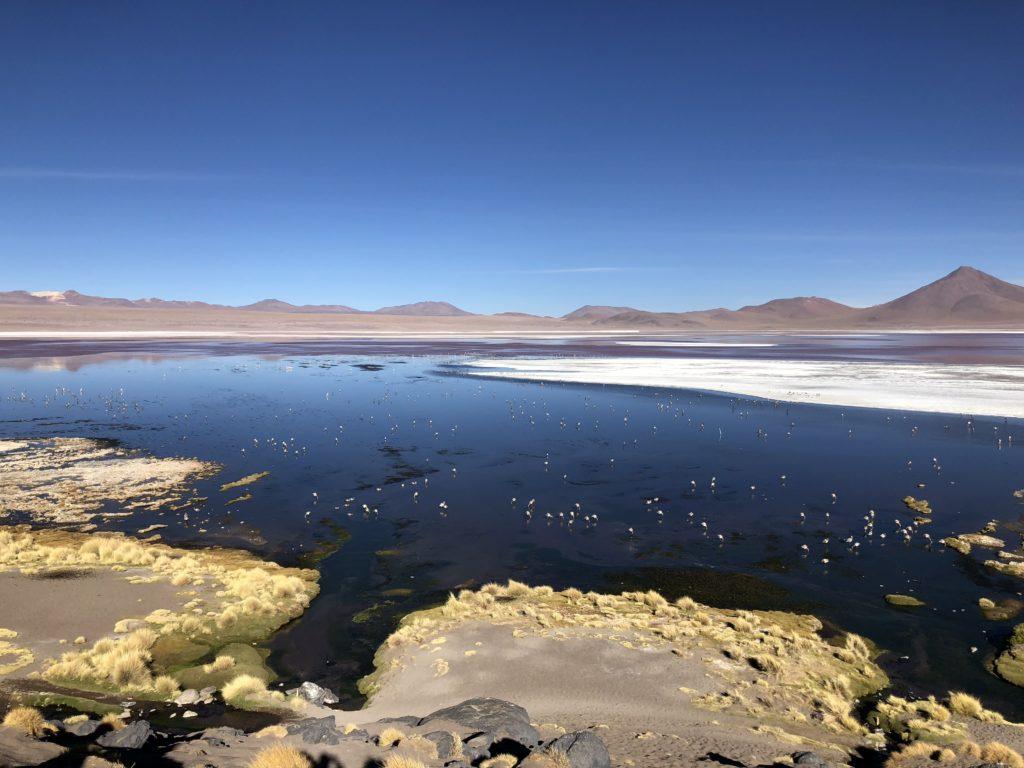 Laguna Colorada Reserva Nacional de Fauna Andina Eduardo Avaroa Uyuni Bolivia South America