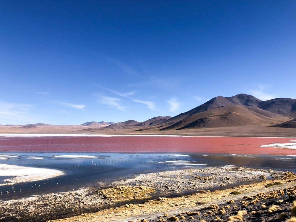 Laguna Colorada Reserva Nacional de Fauna Andina Eduardo Avaroa Bolivia South America