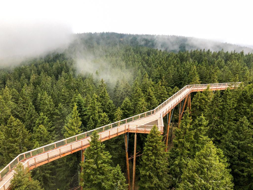Treetop Walk Pohorje Slovenia Europe