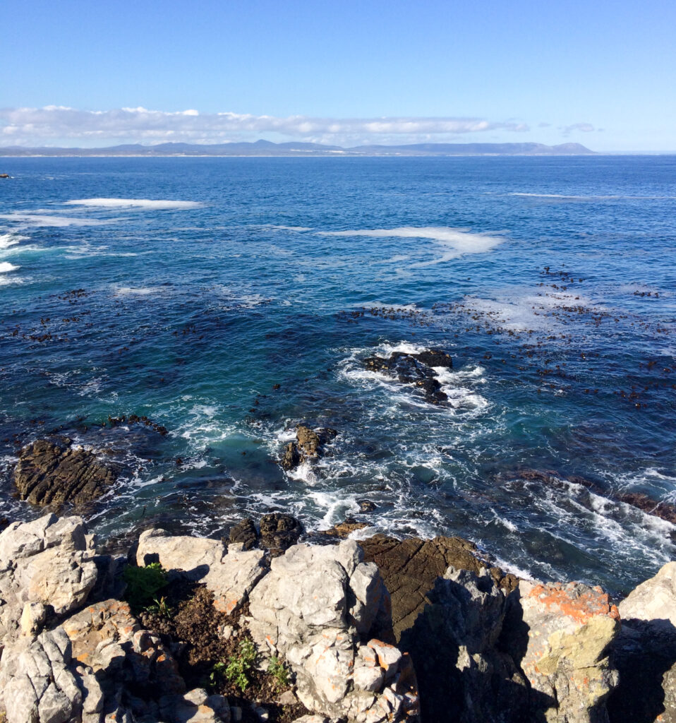 Hermanus South Africa whale watching