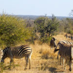 Amazing safari in the Kruger National Park