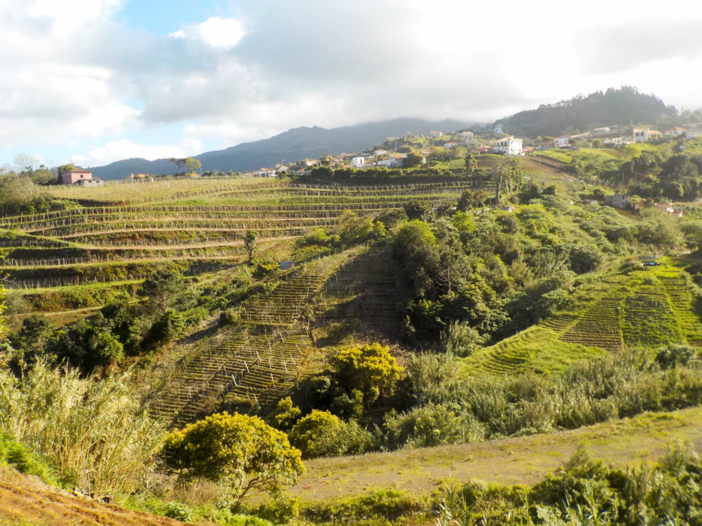 Madeira Portugal Europe islandSao Jorge vineyards wine