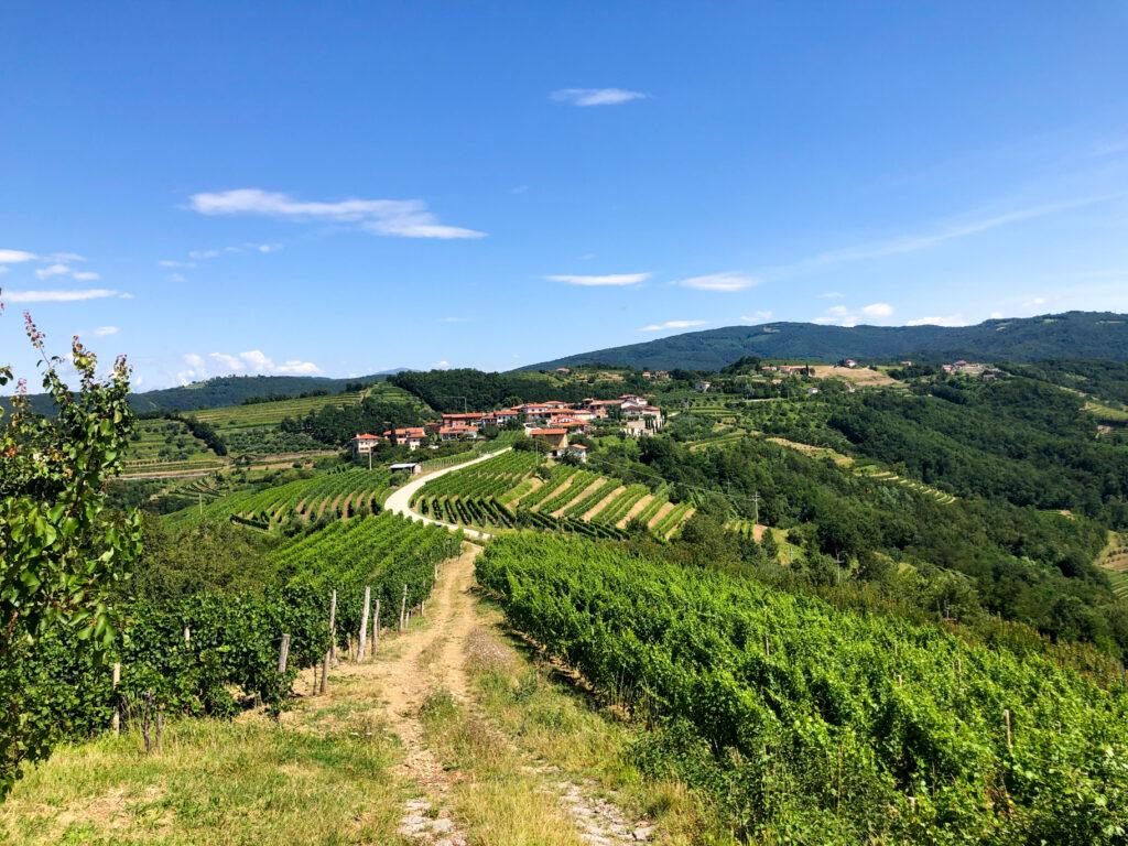 Višnjevik Goriška Brda Slovenia Europe