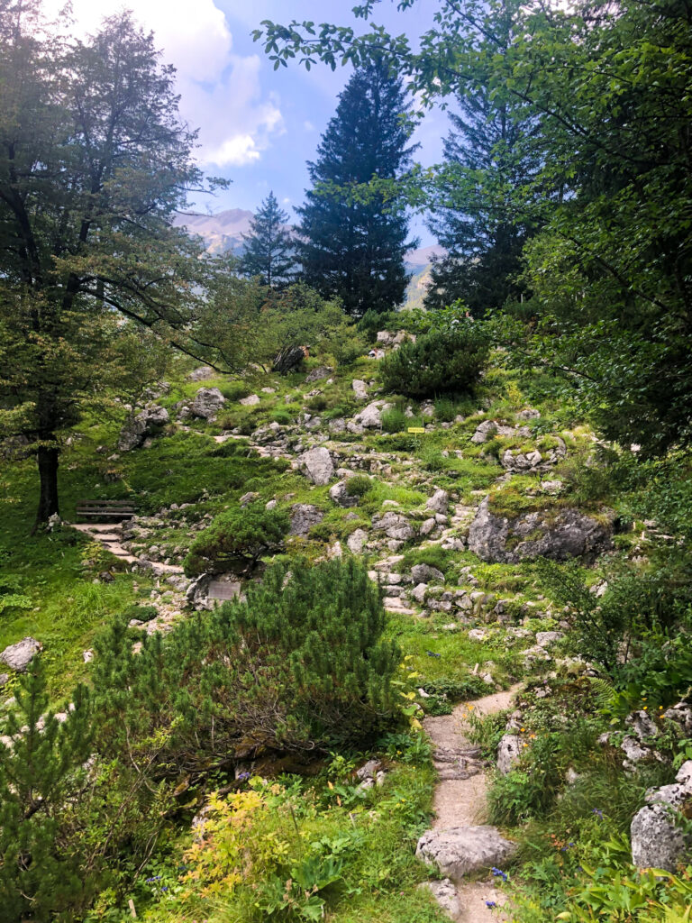 Alpine Botanical Garden Juliana Slovenia Europe